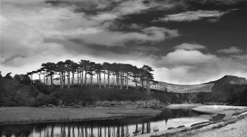 Tree\'s & Sky by alan a