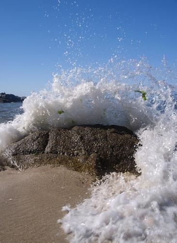 Splash by mule