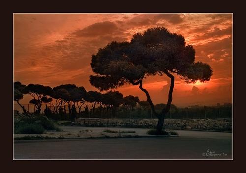 Sunrise by Ruggieru
