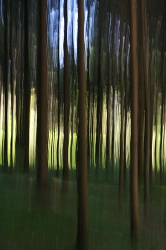 Strange Trees. by SimPick