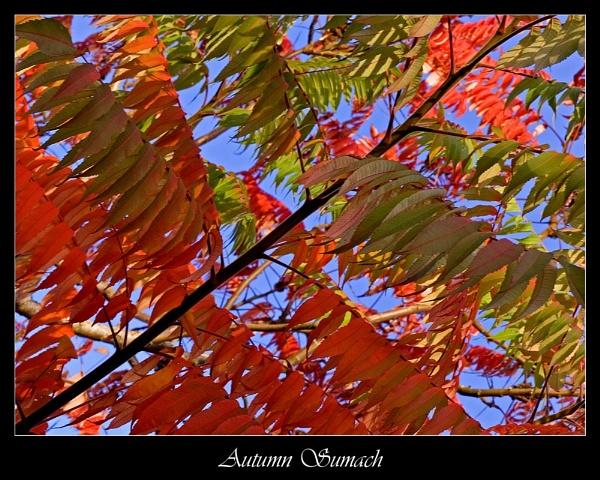 Autumn Sumach by DiegoDesigns