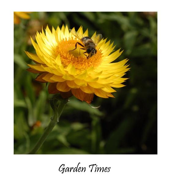 Garden Times by wwwCOLEUKcom