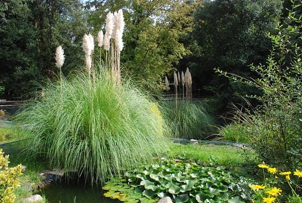The Water Garden by trissie