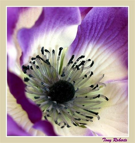 flora 25 by troberts