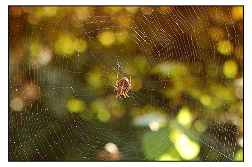 The Web 2 by Juliee
