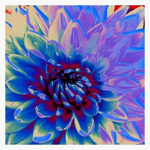 Digital Clematis by blink182
