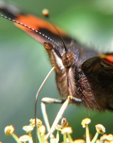 butterfly macro by KevinJM