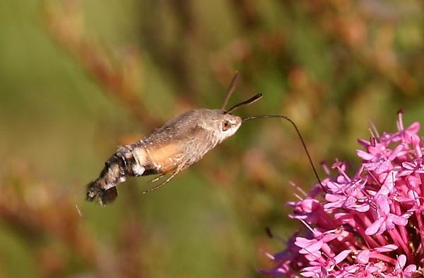 wingless wonder by warbstowcross