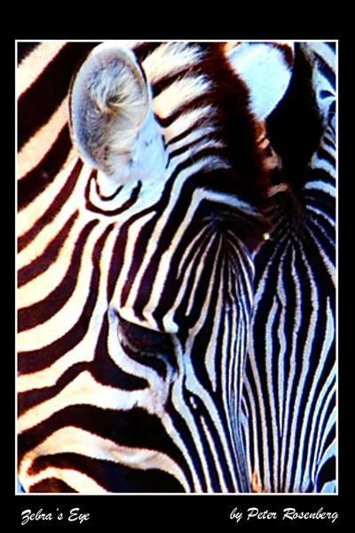 Zebra\'s Eye by pmscr
