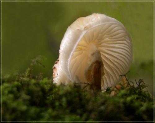 mushroom again by vonny