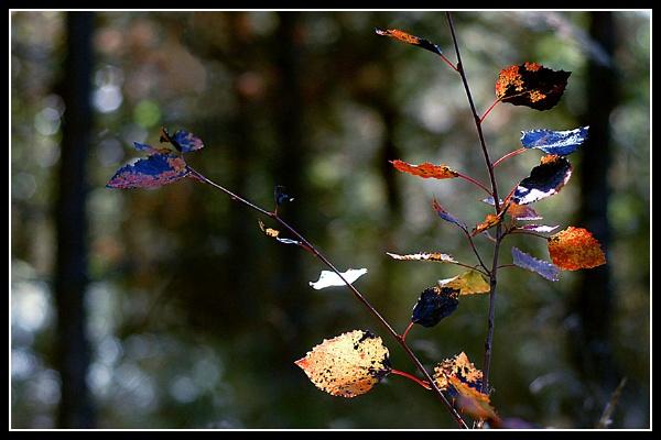 autumn by zebhylon
