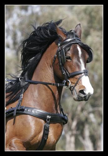 harness by kelmac