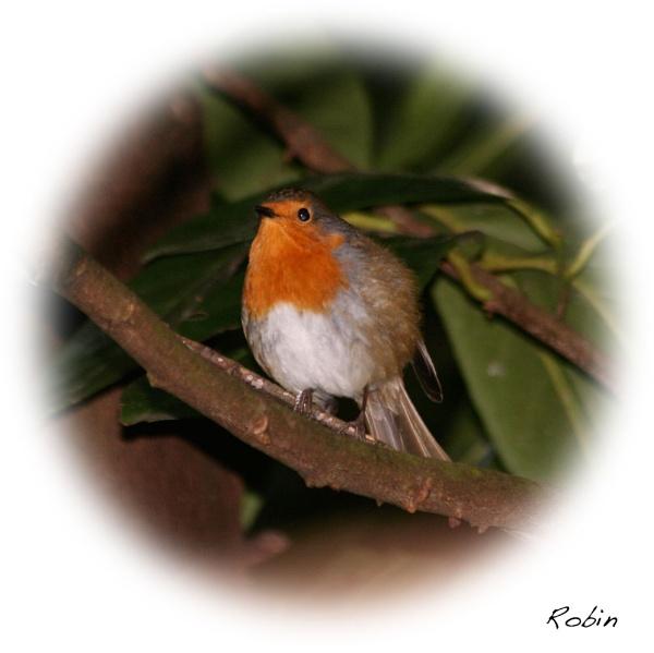 Round Robin by mickf1
