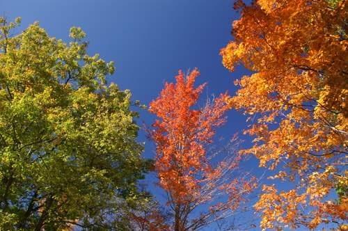 Autumn Colours 2 by VolcanoCowboy
