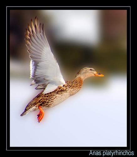 wings 2 by mirceax