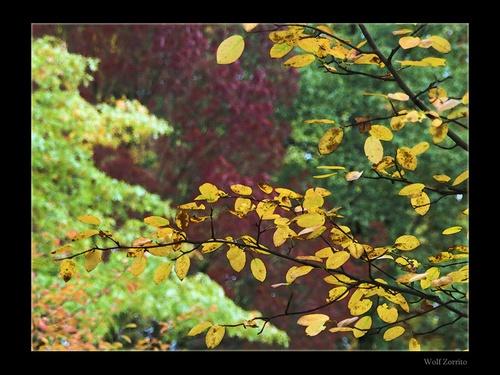 autumn colors by Zorrito