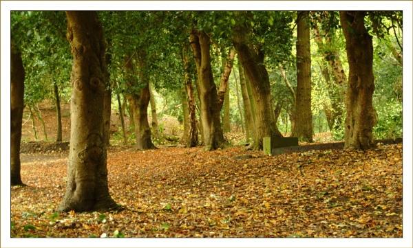 Woodland by Pav