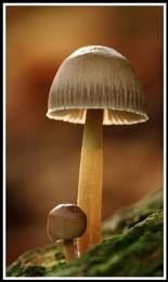 Stourhead fungus #2