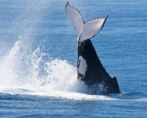 whale tail by delan