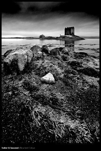 Stalker & Seaweed by sut68