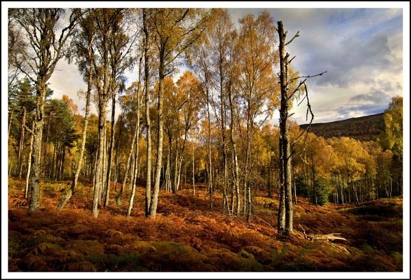 Tummell... by Scottishlandscapes