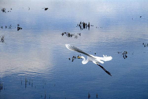 Wetlands by gajewski
