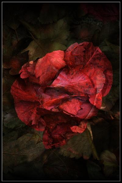 Rose Leaf Surrealism by Morpyre