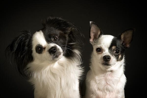 Turbo & Randolph by denka
