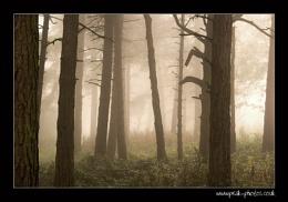 misterious woods pt2