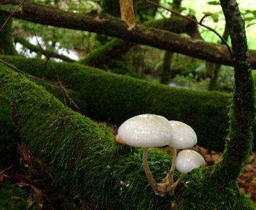 Artistic Fungi rework by jeff50