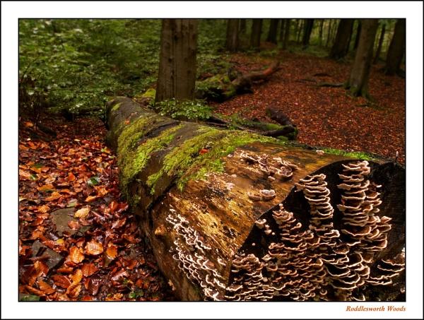 Roddlesworth Woods by PeterBee