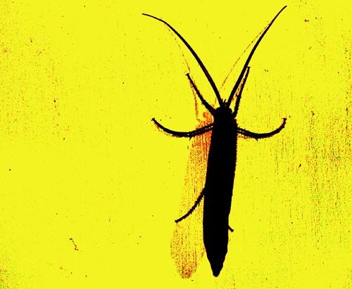 bug by tonyjf