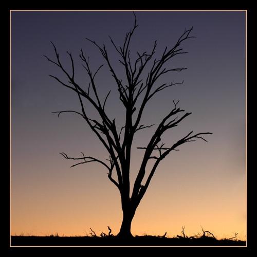 lone tree by kelmac