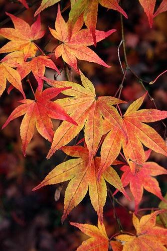Autumn Colour by Pixsie