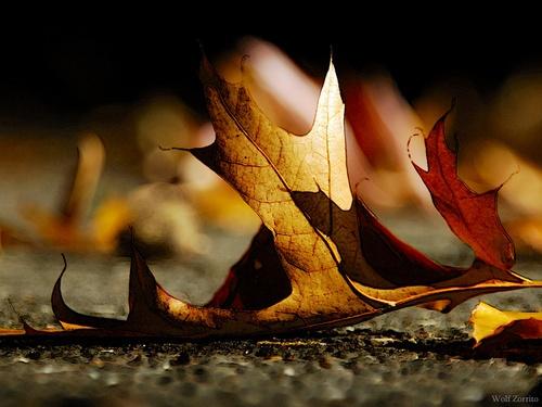 leaf in the sun by Zorrito