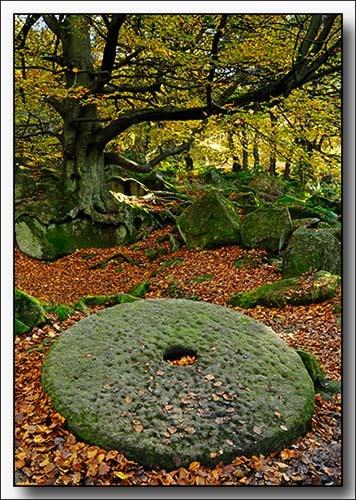 Wheely Autumn Now by Perdiccas