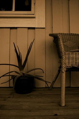 Cactus by SarahK