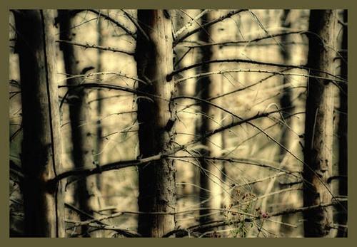 Cuejdel. Dead Wood by ovidiusoleriu