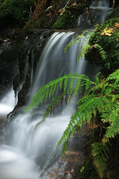 Waterfall fern by RipleyExile