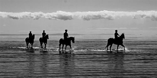 Racehorses by delan