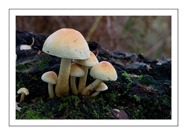Fungus by stuwhitt