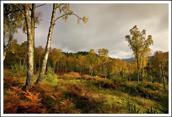 Autumnal light... by Scottishlandscapes
