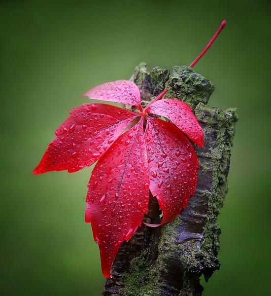 autumns colours by clintnewsham