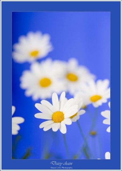 Daisy Chain by ShaunL