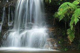 Waterfall fern 2 by RipleyExile