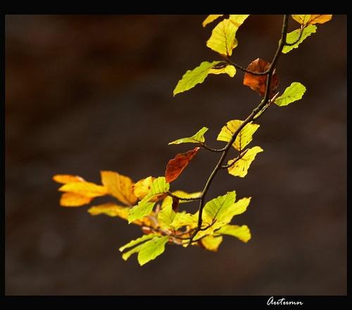 Autumn by martin.w