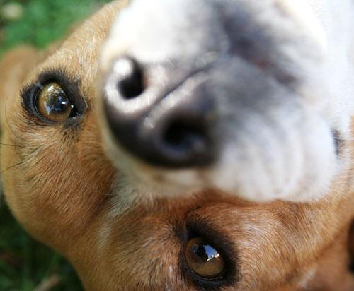 My Pet by leons_photos