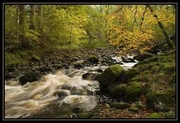 Woodland Walk (3)