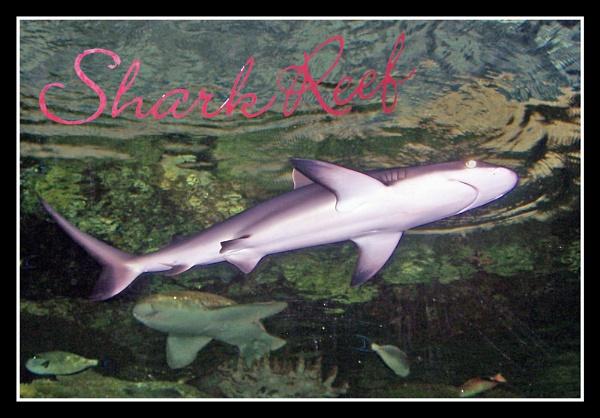 Shark Reef by mark2uk
