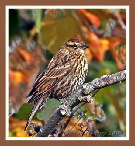Late Autumn Sparrow by alpha788
